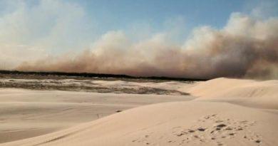 Bombeiros combatem incêndio em área de reflorestamento no Litoral Norte
