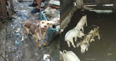 Maus tratos tratos a animais leva homem a prisão em Capão da Canoa