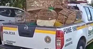 Investigaram uma denúncia e localizaram no vizinho 41 pássaros silvestre