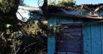 Bombeiros removem árvore que caiu sobre residência em Tramandaí
